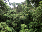 Rainforest Aerial Tram Atlantic